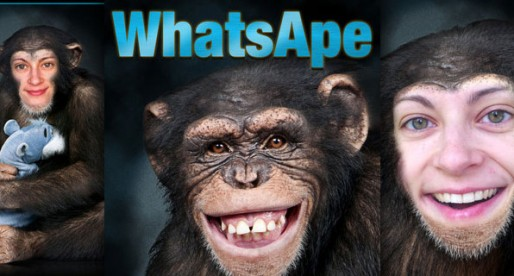 WhatsApe 1.0: There's a monkey in all of us